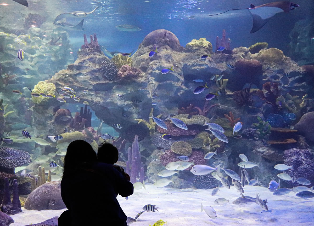 A silhouette of a mother and child looking at a large aquarium full of coral and tropical fish.