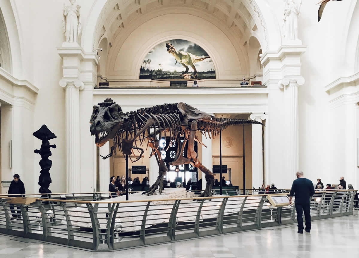 Sue the T-Rex skeleton in Chicago's Field Museum of Natural History.